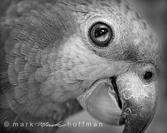 Mark_Hoffman_photophart_DSC_6240-2_cap1_var1.jpg